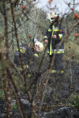 Tűzoltók egy bokor takarásában