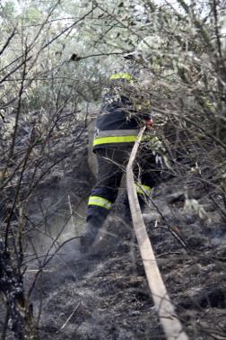 Bokrok közé tömlőt húz a tűzoltó