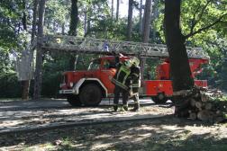 Bicskei tűzoltók létraszere az erdőben