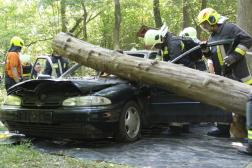 Roncsra dőlt fa a gyakorlaton