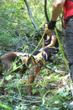 Imitált sérült kutatása kutyával