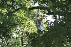 Létraszer kosarából fát vágnak